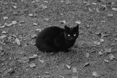 svart katt Royaltyfria Bilder