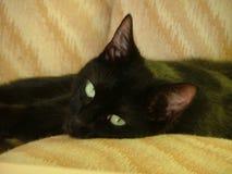 svart katt Arkivbilder