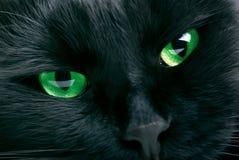 svart katt Royaltyfri Fotografi