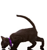 svart katt Royaltyfri Bild