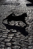 svart katt Royaltyfria Foton
