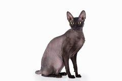svart katt Arkivbild