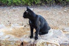 svart katt Royaltyfri Foto