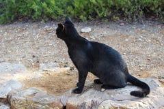 svart katt Arkivfoto