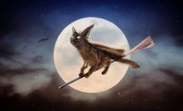 Svart katt för allhelgonaafton på kvasten över månen royaltyfria bilder