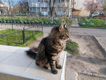 Svart katt för gård på en balustrad i gården Royaltyfri Foto
