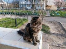 Svart katt för gård på en balustrad i gården Arkivfoton