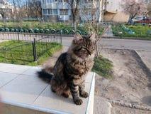 Svart katt för gård på en balustrad i gården Fotografering för Bildbyråer