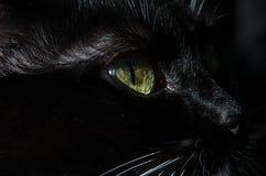 Svart katt för grönt öga Royaltyfri Bild