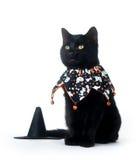 svart katt gulliga halloween för haklapp Arkivbilder