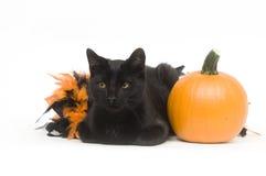 svart katt halloween Arkivfoton