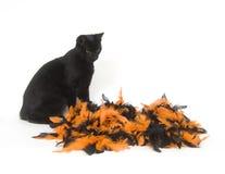 svart katt halloween Arkivfoto
