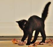 svart katt halloween Royaltyfri Bild