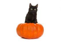 svart katt halloween Arkivbild