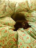 Svart katt, i att vila för säng fotografering för bildbyråer