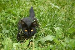 Svart katt i bakhåll utomhus Arkivfoto