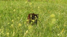 Svart katt i gräset