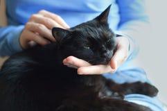 Svart katt i händerna av flickan royaltyfria bilder