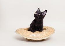 Svart katt i hatt Fotografering för Bildbyråer
