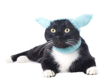 Svart katt i hatten Arkivbild