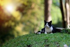 Svart katt i Thailand fotografering för bildbyråer