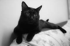 svart katt little Fotografering för Bildbyråer