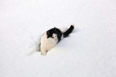 svart katt little sittande snowwhite Royaltyfria Bilder