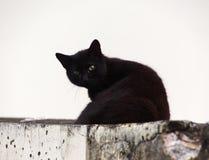 Svart katt med att hålla ögonen på för gröna ögon Arkivfoto