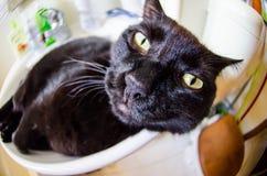 Svart katt med den roliga framsidan Fotografering för Bildbyråer