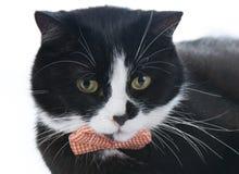 Svart katt med en pilbåge Royaltyfri Foto