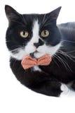 Svart katt med en pilbåge Royaltyfri Fotografi