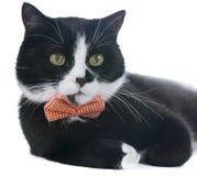 Svart katt med en pilbåge Royaltyfria Foton