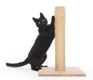 Svart katt med en skrapande stolpe royaltyfria foton