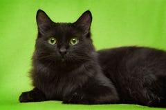 Svart katt med gröna ögon som ligger på filten Royaltyfri Bild
