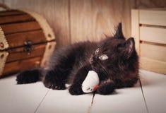 Svart katt med gröna ögon som ligger på träbakgrund Arkivfoton