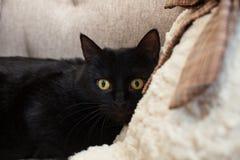 Svart katt med gula ögon med skräckblickar in i utrymme Mentala och emotionella problem av katter royaltyfri foto