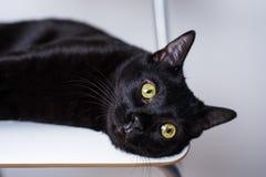 Svart katt med gula ögon som ligger på vit stol som ser bredvid kamera royaltyfri fotografi