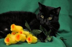 Svart katt med gula rosor Arkivbild