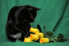 Svart katt med gula rosor Royaltyfri Fotografi