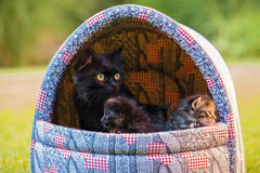Svart katt med kattungar i korg Arkivbilder