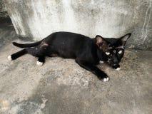 Svart katt med såret Royaltyfria Foton