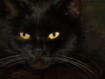 Svart katt med två gula ögon Royaltyfria Bilder