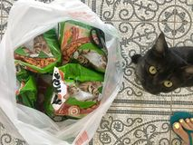 Svart katt och att mata kitiket fotografering för bildbyråer