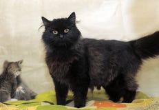 Svart katt och kattungar Royaltyfria Foton