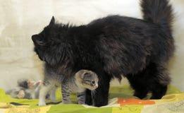 Svart katt och kattungar Royaltyfri Foto