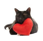 Svart katt och röd hjärta Arkivbild