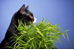 Svart katt på blå bakgrund. Royaltyfria Bilder