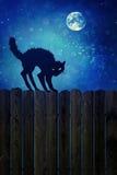 Svart katt på det wood staketet på natten Royaltyfri Fotografi