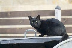 Svart katt på en avskrädebehållare framme av staketet arkivfoton