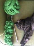 Svart katt på en grön soffa bredvid att sticka och att sticka royaltyfria bilder